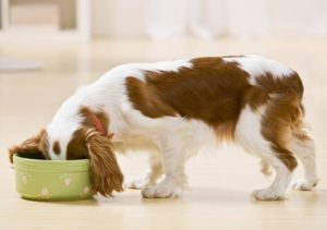 собака ест из миски
