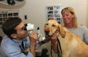 врач смотрит глаза у собаки