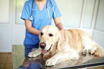 собака в ветлечебнице